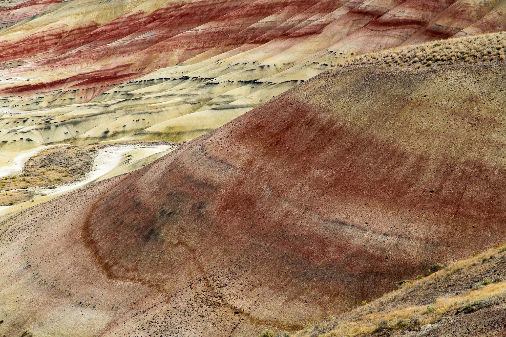 a photo of a desert landscape filled by yellow hills with wide red striations, thin black striations, and sparse scrub vegetation